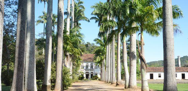 Une longue allée de palmiers mène à la fazenda do Paraiso