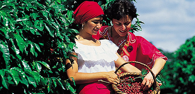 Alba est heureuse de montrer à Mania son panier empli de cerises de café bien rouges