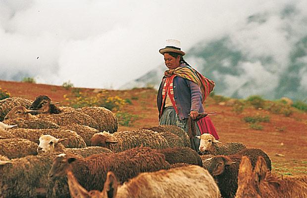 Bergère péruvienne et son troupeau