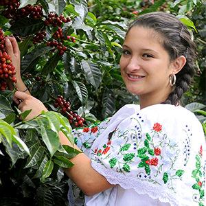 Brenda dans les caféiers au Costa Rica