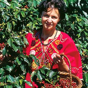 Mania Dequidt dans les caféiers au Costa Rica