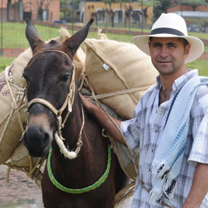 Le célèbre Juan Valdez et sa non moins célèbre mule Conchita du Huila - Colombie