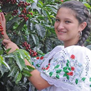 Le Costa Rica, un des arabicas rares de mon café Soleil Matinal