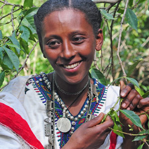 Le moka d'Ethiopie, un des arabicas rares de mon café Soleil Matinal