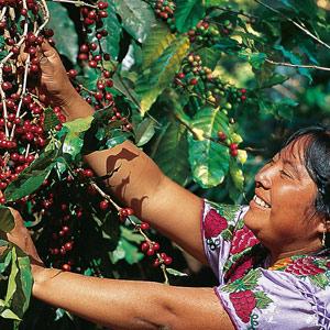 Ximena du Huehuetenango - Guatemala