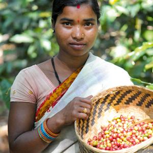 L'Inde Plantation, un des arabicas rares de mon café Soleil Matinal
