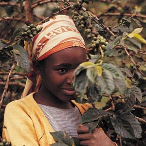 Winnie de Nyeri - Kenya