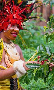 L'arabica flamboyant de Papouasie Nouvelle Guinée