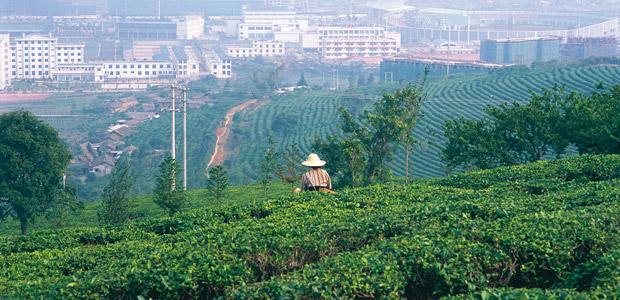 Simao, capitale du thé