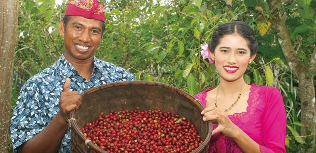 Couple à la cueillette des cerises de café