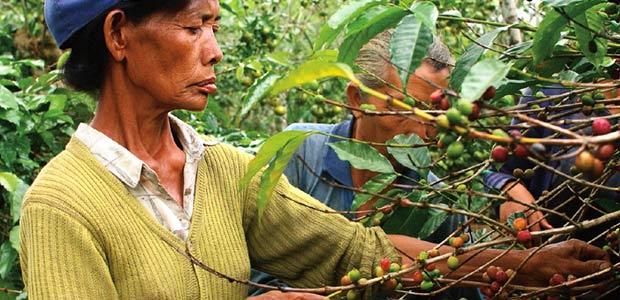 Une famille de Kintamani rencontrée dans les caféiers