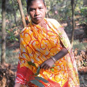 Les dames cueillent encore les cerises de café en habit traditionnel