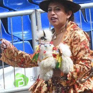 Le lama, animal emblématique de Bolivie