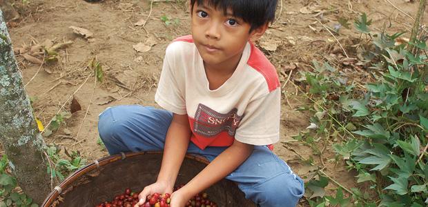 Un jeune garçon nous montre son panier empli de cerises de café