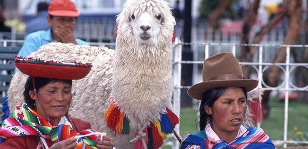 Femmes en costume traditionnel et lama blanc au Pérou