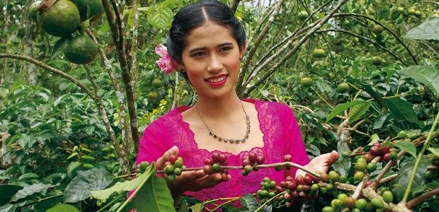 Ravissante jeune femme dans les caféiers