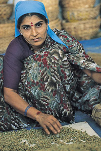 femme-tri-cafe-vert-inde-1999
