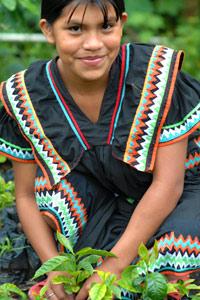 Indienne N'Gobé au repiquage du café au Panama