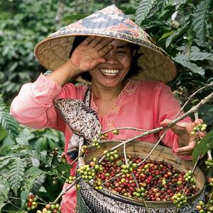 Jeune femme qui éclate de rire dans les caféiers à Java.