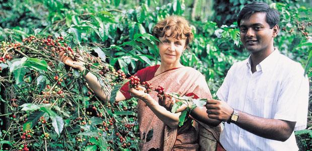 Mania en sari dans les caféiers