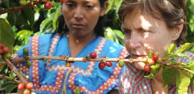 Mania Dequidt et Indienne N'Gobé à la cueillette des cerises de café à Boquete au Panama