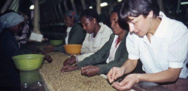 Mania au tri manuel du café vert