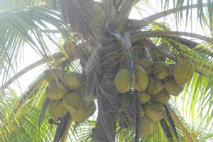 Des palmiers à perte de vue