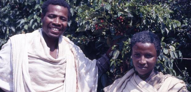 Un père et sa fille dévoilent les cerises de café.