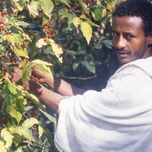 Père Amhara