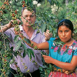 Paul Dequidt à la cueillette des cerises de café chez les Indiennes Maya au Guatemala en 1990