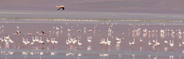 De nombreuses espèces d'oiseaux endémiques