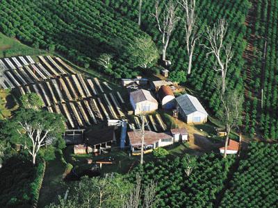 Plantations de café vues du ciel au Kenya