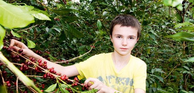 Raphaël, notre petit-fils, nous accompagne à la cueillette des cerises de café à Yrga Chefe