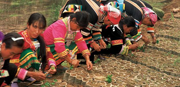 Le repiquage du café de Simao au Yunnan