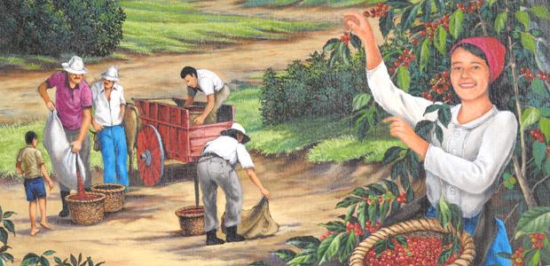 Cueillette de café à Sarchi avec une carreta