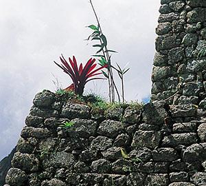 La végétation, de type subtropical, y est partout luxuriante
